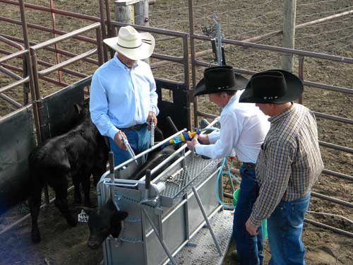 All vital processing areas are accessible through openings or doors in the chute. A handy tray provides storage.